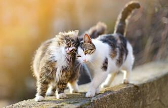 Høyesterett: Ikke grovt brudd på dyrevelferdsloven å knekke nakken på to katter