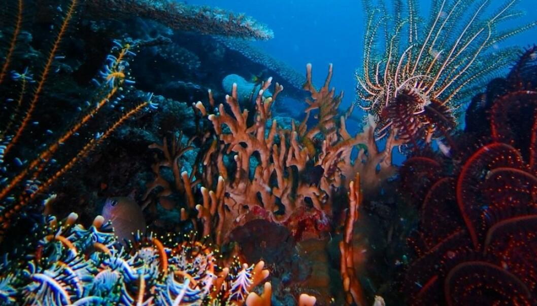 På Vanuatu får Anne Nesheim og ektemannen havet og eksotiske korallrev som nærmeste nabo. Foto: Privat/@nesheimanne
